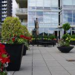 Large downtown deck. Elemental Garden Design.