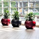 Ruby planters, bishoplandscaping.ca