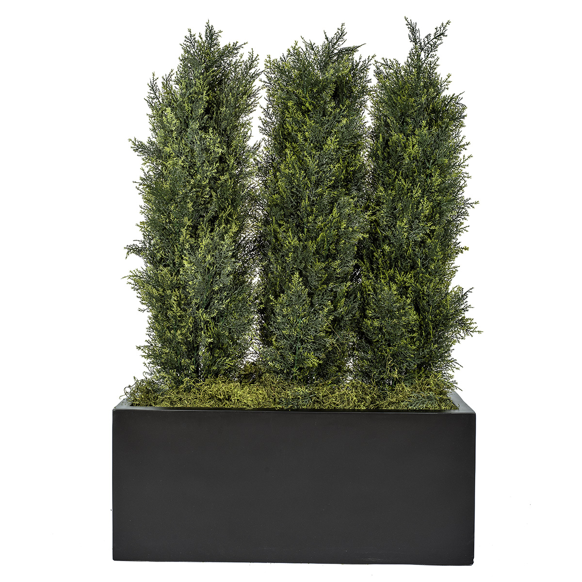 Cypress Shrub Atlas Pots